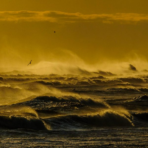 Angry Golden Waves